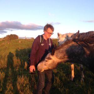 Anders Fairyhill ponies
