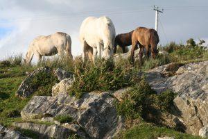 Kingstown Ponies 2